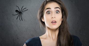Боязнь пауков (арахнофобия): что это такое, кратко